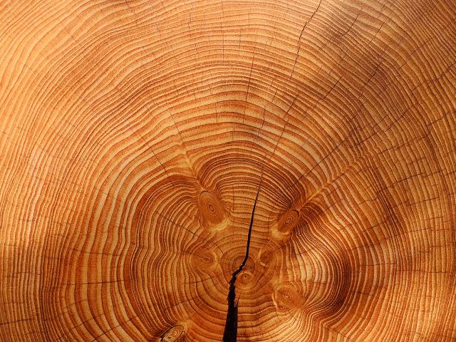 生活の中に本物の「木」を取り入れましょう